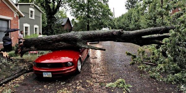 Упало дерево на машину - что делать?